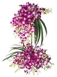 30 Orchids