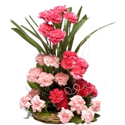40 Mixed Carnations