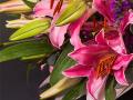 Pretty Woman Flowers